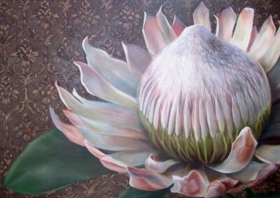 Pink Protea IMG_9898